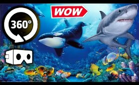 VR 360 Video - Secret Underwater World 3D - Virtual Reality 4K